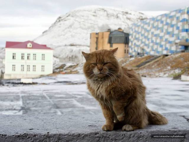 2_Arctic_Cat_Poses_in_Town