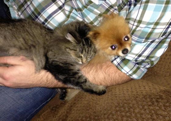 2_Cat_Cuddles_Dog