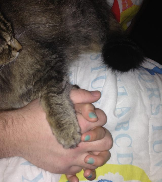 4_Cat_Human_Holding_Hands