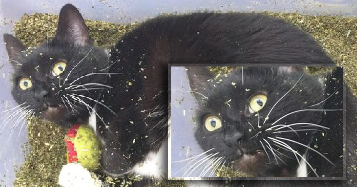 "Cat Discovered ""Catnip Heaven"" Just In Time For The Most Hilarious Expression EVER."