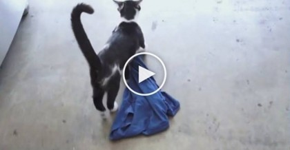 He Lost His T-Shirt, But Then He Looks Down…There It Goes… This Kitty Is Busted, LOL!!
