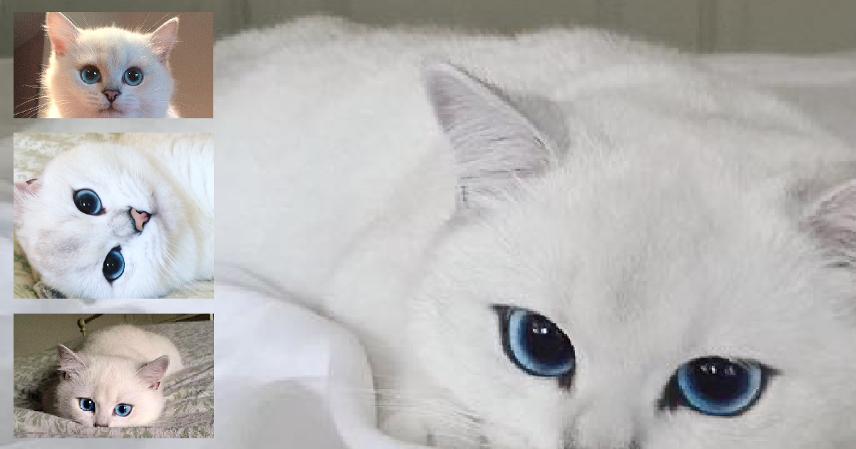 "Just Take One Look At This Cat, See Why People Are Calling Him The ""Most Beautiful Cat Ever"""
