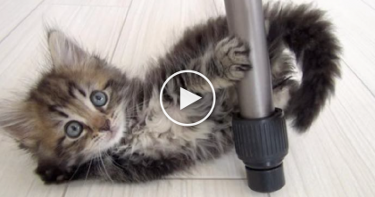 Little Fluffy Kitten Grows Up And Surprises Everyone… Can You Believe How Fluffy He Is Now?!