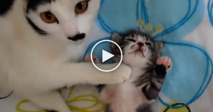 This Tiny Little Kitten Is Having A Bad Dream, But Watch What Mommy Does… It's Just PRICELESS.