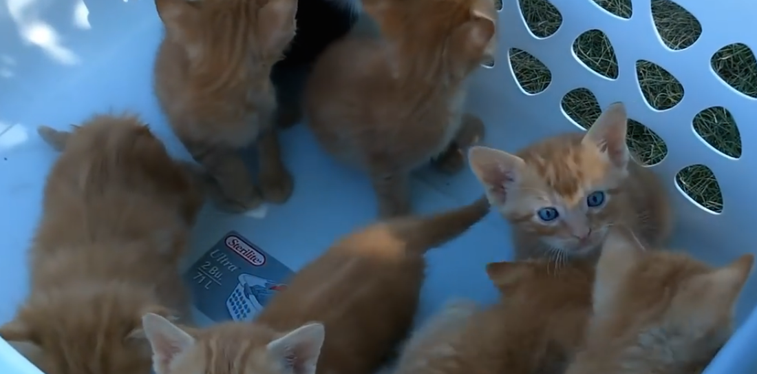 He Took A Basket Of Kittens Outside, But Just Watch Them… It's The Cutest Thing EVER, Omg!!