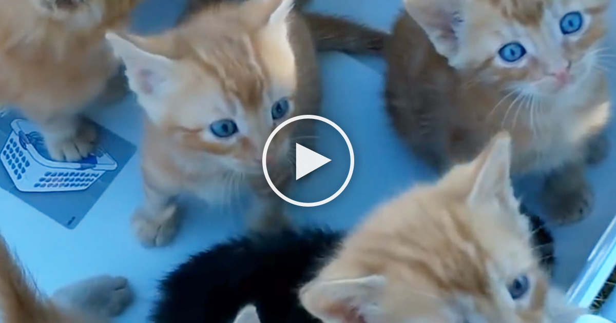 He Took A Basket Of Kittens Outside, But Just Watch Them… It's The ...