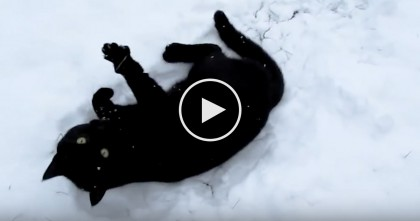 Cat Discovers Snow, But What He Does Next? Just Watch His Response, LOL