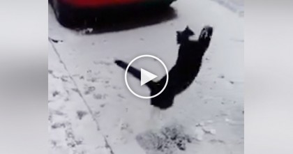 Cat Discovers Snow For The First Time, But Watch That Reaction, HILARIOUS