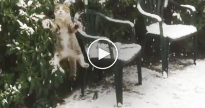 Cat Discovers Snow For The First Time, But You've Gotta See His Reaction… LOL, Just Watch!