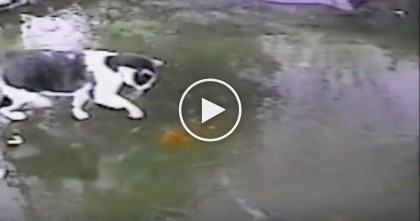 Cat Goes Absolutely NUTS When He Discovers Live Fish Under The Ice
