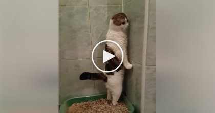 "Cat Goes To Bathroom In Weirdest Way, ""My cat only poops standing up!"""