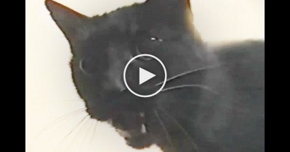 Cat Hears Human Playing Harmonica, But Listen To His Response, Just WATCH