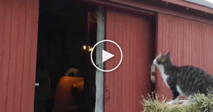 Cat Makes The Most MASSIVE Leap Of Faith I've Ever Seen, But Then Drastically Fails… WATCH