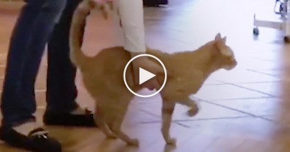 Cat With Rare Brain Condition, Can't Walk Properly, But Watch What His Family Does