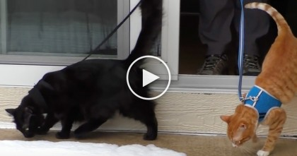 Cole And Marmalade Discover Snow For The First Time, Just WATCH Their Reactions!