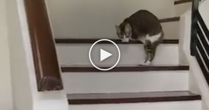 Disabled Cat With Only Two Legs, But Just Watch Him Tackle The Staircase… WOW, Impressive!