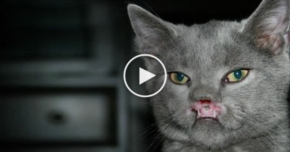 Doctors Said This Cat Would Die, But Weeks Later, Now Everyone Is Shocked To See