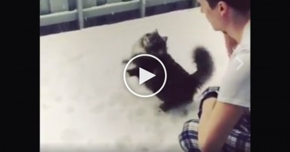 "Fluffy Cat Discovers ""Snowballs"" And White Fluffy Stuff… Now Watch The Cat's Reaction!"