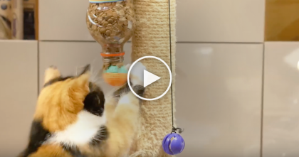 Guy Comes Up With Adorable, Genius Ideas, They'll Entertain Your Cat Forever