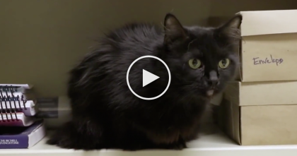 He Was Forced To Give Up His Senior Pets, But They Refused To Leave Each Other's Side… WATCH