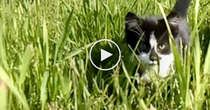 Kind Women Catches Tiny Black Stray Kitten, Rescues Him… Just Watch, OMG!