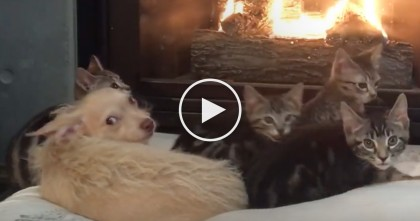 Kittens And Dogs Are Cozy By The Fire, But Then She Says One Word… Just Watch Until The End!