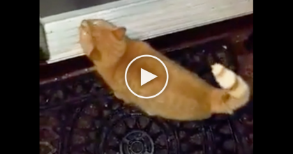 Kitty Wants To Go Inside, So When His Human Tells Him To? Watch What He Does With His Paws, WOW!