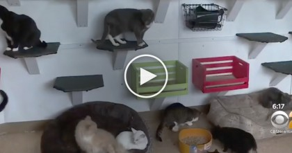 Man Builds Incredible Haven For Cats On His Own Property, The Results Are AMAZING!