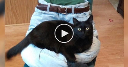 Man Comes Up With 5 Hilarious, Fun, And Entertaining Ideas That Cats Will Love, WATCH.
