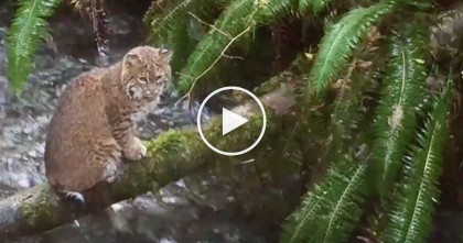 Man Goes Looking For Fish, But Then Discovers Little Bobcat… OMG How Did He Do That?
