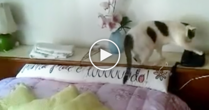 Phone Starts Ringing, But The Cat's Response Is The Best Thing Ever, Omg!