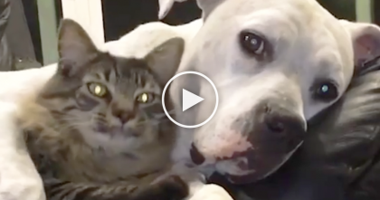 They Adopted This Doggie And Kitty, But What Comes Next Is TOO Sweet! WATCH