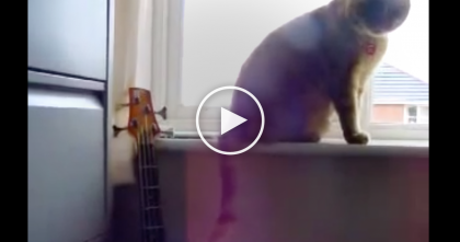 They Heard Someone Playing The Guitar, So They Went Into The Room And Discovered THIS