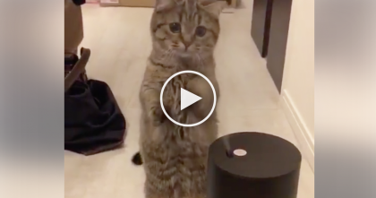 Kitten Discovers Steam-Machine For The First Time, But Just Watch His Reaction, Omg!