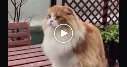 This Cat Sees Snow Flakes Falling, But Just Watch The Expression On His Face, HILARIOUS