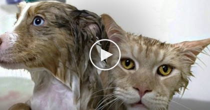 This Puppy And Cat Were Plopped Into A Bath Together, But The End Result? Too Cute To Handle!