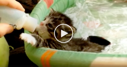 Watch Thirsty Kitten Drinking From Bottle, It's The CUTEST Thing Ever!