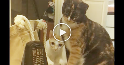 Two Cats Have Never Seen A Metronome Before, So When It Starts Moving? OMG This Is HILARIOUS