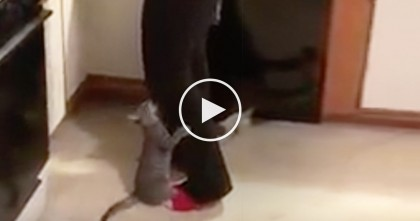 Watch Kittens Response When She Tries Opening Their Food, HILARIOUS.