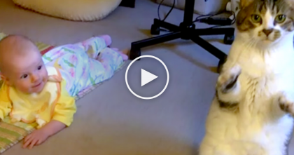 Watch The Cat's Reaction When Mom Puts Her Baby On The Carpet