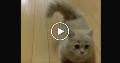 Watch This Kitten's Hilarious Reaction When He Notices A Piece Of Paper On The Floor, LOL