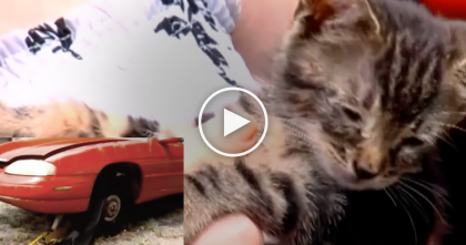 Women Destroys Car, Uses Chain-Saw To Cut Dashboard To Save A Trapped Kitten, WATCH